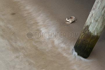 Crab on sand beneath pier