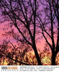 colorful sunset in winter with a tree