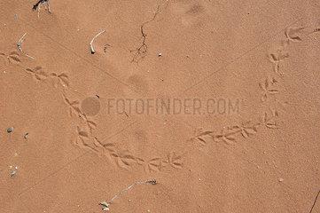 Bird tracks in sand  full frame