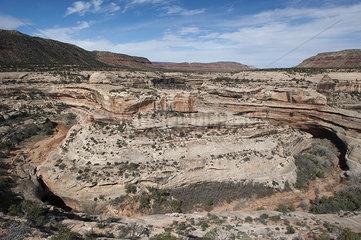 White Canyon  Natural Bridges National Monument  Utah  USA