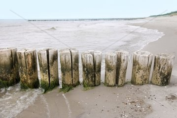 wooden groynes at th beach of the baltic sea