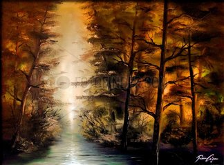 Sumpf im Wald