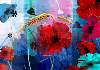 Mohnblumen Blumen