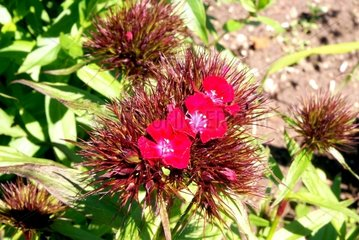 Blume Blueten