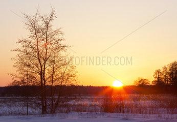Sonnenuntergang im Naturschutzgebiet Duvenstedter Brook  Hamburg  Deutschland