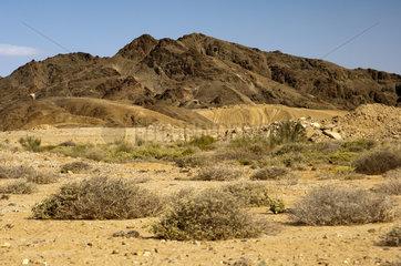 Terrain im Richtersveld-Nationalpark  Suedafrika