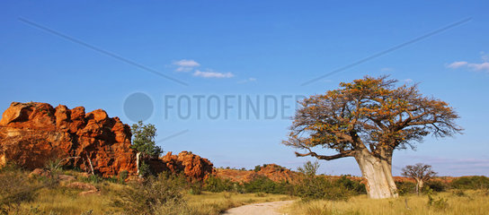 Landschaft mit Baobab im Mapungubwe-Nationalpark  Suedafrika  landscape with Baobab at Mapungubwe National Park  South Africa