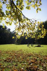 Deutschland  Berlin  Park  Tiergarten im Herbst