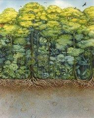 Regenwald Serie Bodenschichten