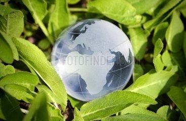 Weltkugel von Blaettern umgeben  Nachhaltigkeit