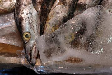 Hong Kong  China  frische Fische liegen auf Eis