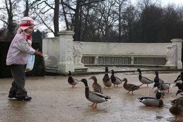 Potsdam  Deutschland  ein Kind fuettert Enten