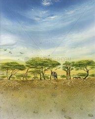 Trockenwald Serie Bodenschichten