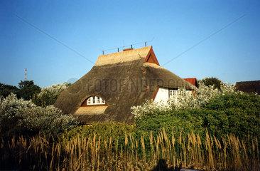 Reedhaus