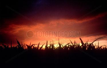Sonnenuntergang ueber Feld im Berliner Umland