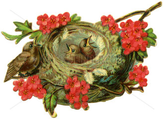 Jungvoegel im Nest  Illustration  1890