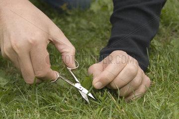 Mann schneidet seinen Rasen Nagelschere