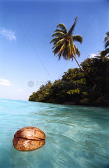 Malediven  Insel Vilamendhoo  Hausriff