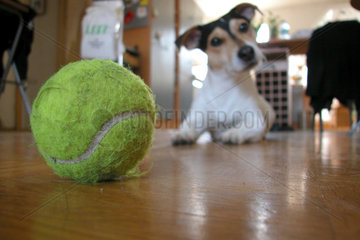 dog and his ball