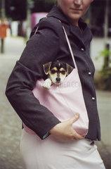 Hund Handtasche