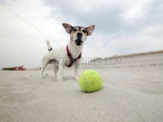 Hund bewacht seinen Ball