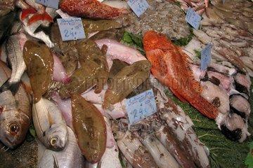 Spanien - Barcelona Schollen auf dem Fischmarkt