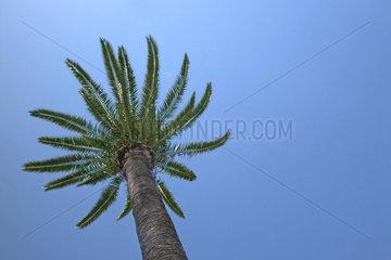 Spain   Barcelona   palm with blue sky