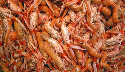 Spain   prawns on the fish market