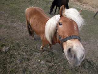 Pony schaut nach oben in die Kamera