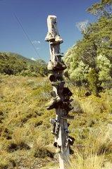 Neuseeland  Suedinsel  Kahurangi National Park  Heaphy Track  Gouland Downs  humorvolles Wegzeichen  errichtet von Wanderern
