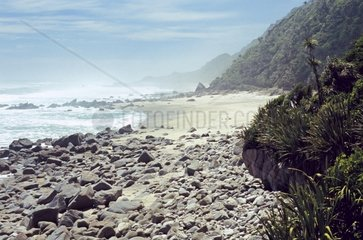 Neuseeland  S?dinsel  Kahurangi National Park  Heaphy Track  Strand zwischen Heaphy Bluff und Crayfish Point