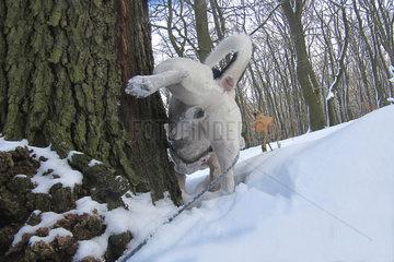 Jack Russell im Schnee