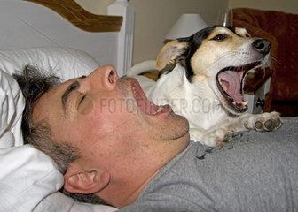 Hund und Herrchen gaehnen  Jack Russell