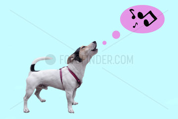 Jack Russell heult