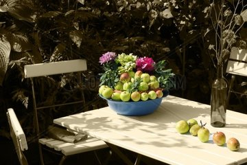 Aepfel im Garten