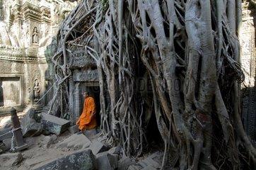 Buddhistische Moenche im Ta Prohm
