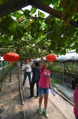 CHINA-ZHEJIANG-VILLAGE-TOURISM (CN)