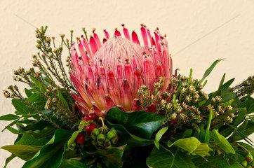 Blume Bluete Protea