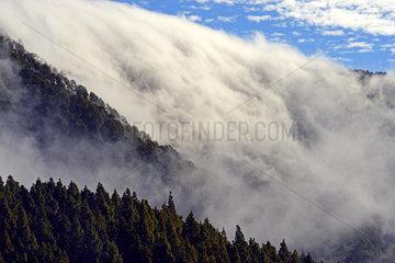 Passatwolken stuerzen ueber einen Bergkamm  Nationalpark Teide  T