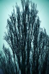 Unheimlicher Baum im Winter