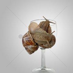 Gebilde von Weinbergschnecken an einem Weinglas