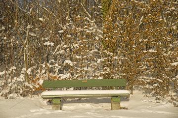 Parkbank  Winterwald  Buchen (Fagus)  Schwaebische Alb  Baden-Wuerttemberg  Deutschland  Europa