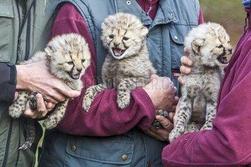 Tierpflegerin Anke Riem mit einem Geparden Jungtier