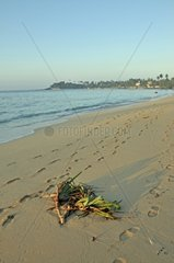 Strand in Unawatuna  dahinter die Wella Devale Dagoba  Sri Lanka  Ceylon  Suedasien  Asien