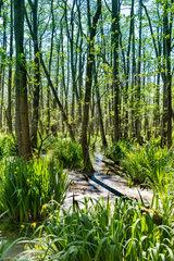 Sumpfiger Wald