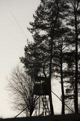 Jaegerstand  Hochsitz am Waldesrand in der Daemmerung