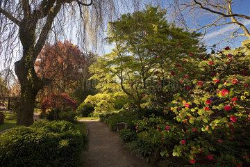 LEV_Japanischer Garten_10.tif