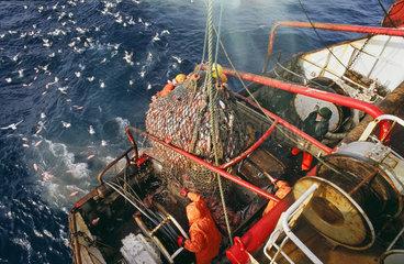 Arbeiten an Bord eines deutschen Fischtrawlers