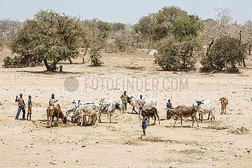 Hitze in der Sahel Zone-Wassernot auf dem Land