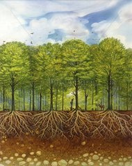 Mitteleuropawald Serie Bodenschichten